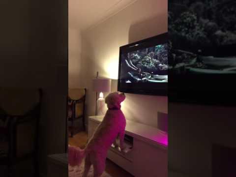 John Lewis 2016 Christmas Advert jumping dog
