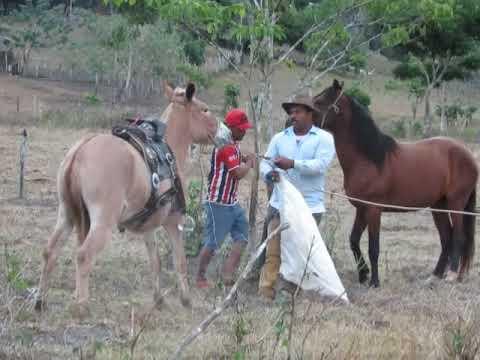 Domadores de burro Bravo   Bruno e Olavo