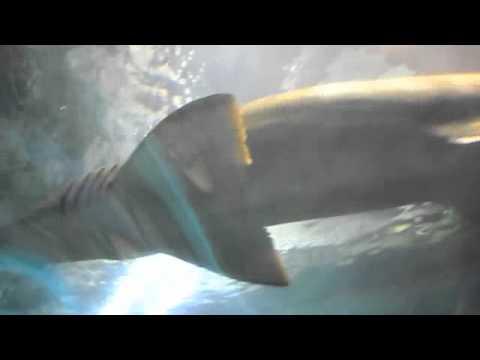 Ocean World Manly - Sydney Australia