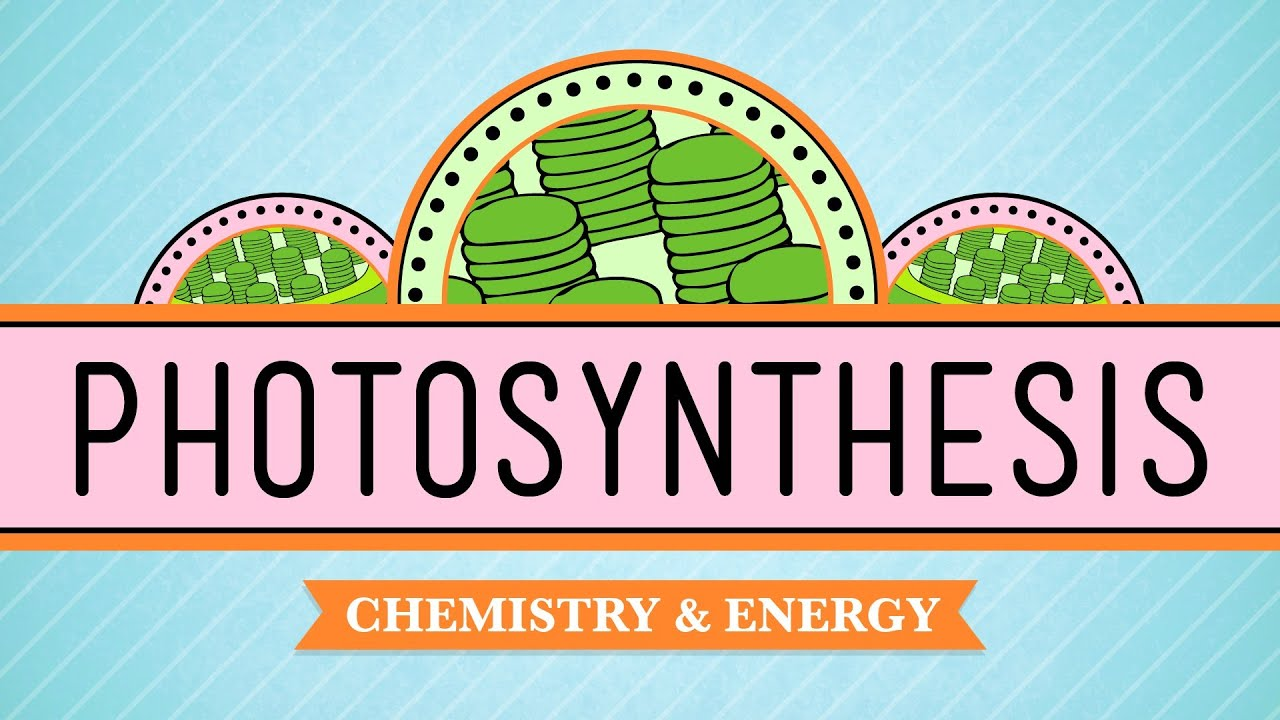photosythesis to This session will introduce the general ideas of both cyclic and non-cyclic photophosphorylation and how these two processes are.
