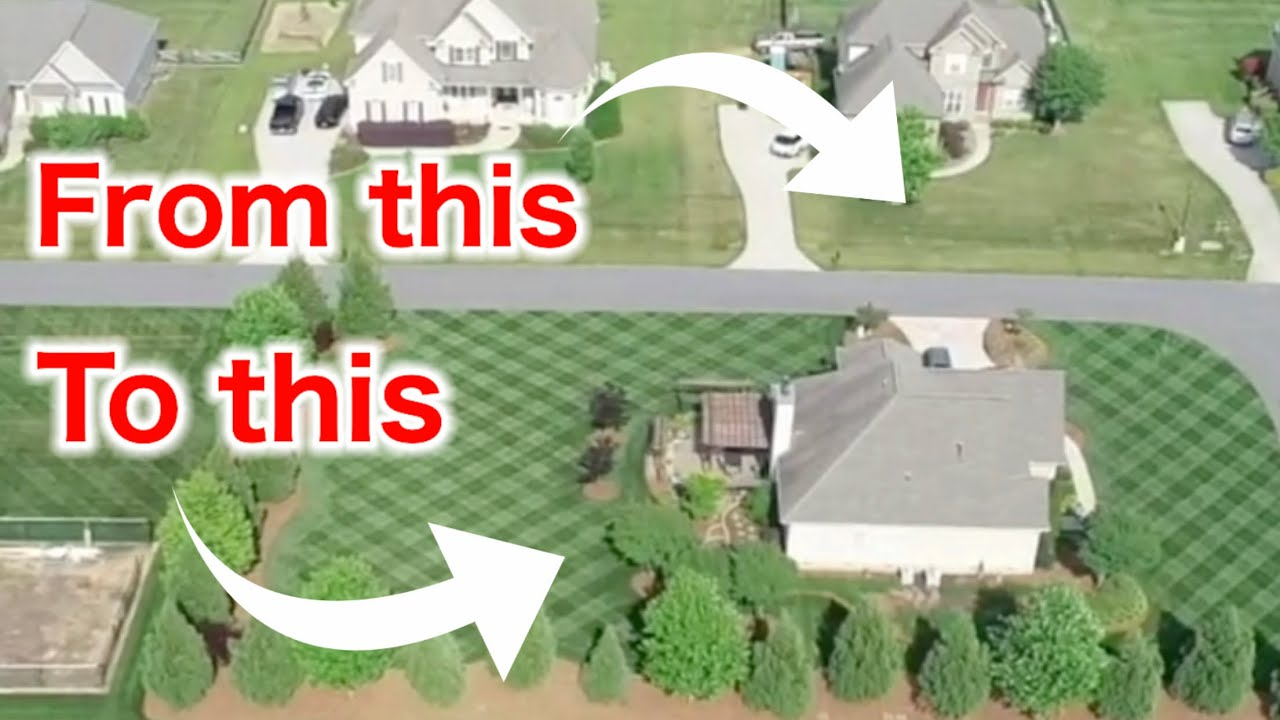 How to Fix a Diseased and Weedy Lawn