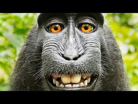 Monkey Suing Photographer
