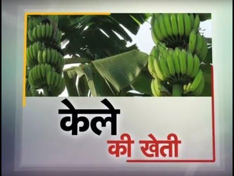 Krishi Darshan - Banana Farming special