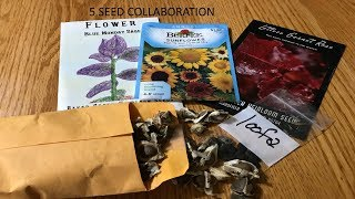 🌱🌾 Top 5 Seeds 2019 Collaboration