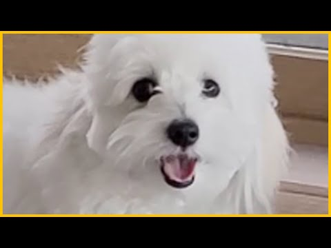 You Have No Choice But To Click This Doggy Picture. from YouTube · Duration:  2 minutes 37 seconds