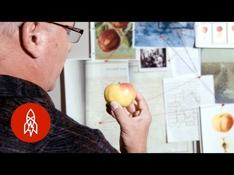 Tracking Down Apples Lost to Time