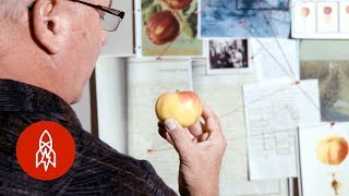 Tracking Down Apples Lost to Time thumbnail