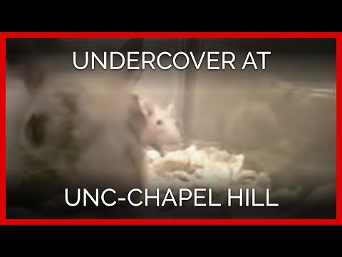 Undercover Investigation at UNC-Chapel Hill