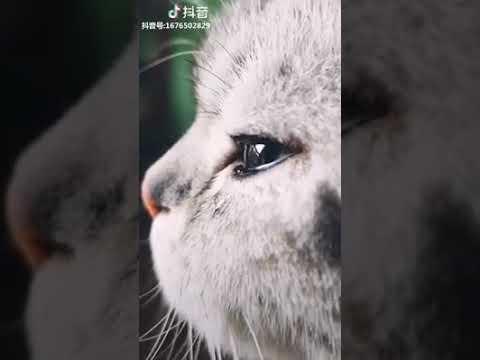 Cat Series: Eyes full of tears