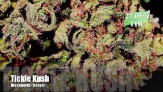 The Strongest Strains on Earth: 2014