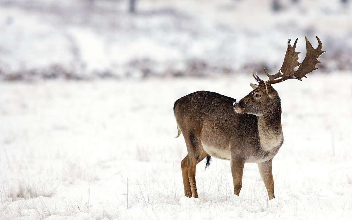 Картинки снежного оленя