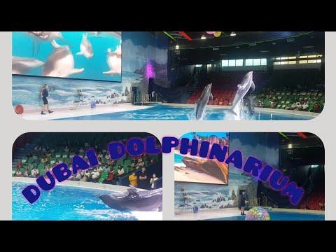 DUBAI DOLPHINARIUM | Dolphin show