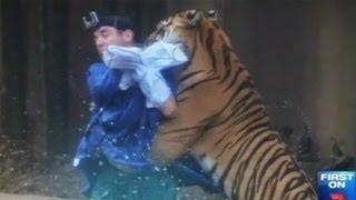 Video Harimau Gigit Leher Pawangnya