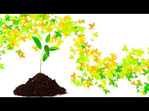 [MOOC EDUOPEN]Ethnobotany: the role of plants in our life