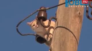 Энергетики сняли кота с опоры электропередач