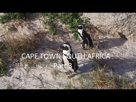 Cape Town Part 3-Robben Island, Cape Point and Penguins!!!
