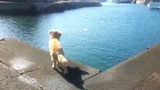 飛び込むまでは、びびっていましたが、一度、海に入ると出て来ません.