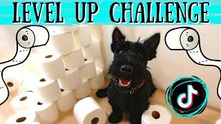 Toilet Paper Tik Tok Challenge // Level Up by Ciara // Scottish Terrier & European Doberman Vlog