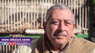 إقبال كبير على «الجيرمين شيبرد والشيرازى» فى سوق الكلاب والقطط.. فيديو
