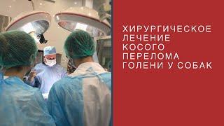 Хирургическое лечение косого перелома голени у собак