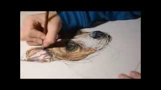 Jack Russell Terrier Speed Drawing