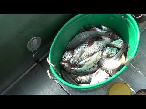 Плотва идет! Рыбалка 1 мая. Ладога. Ловля плотвы на удочку. Кокорево 44 км.