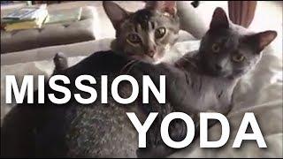 MISSION YODA -  PAROLE DE CHAT (vidéo BONUS de remerciement pour les 100% sur Ulule)