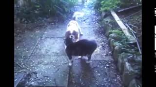 Cats vs dogs round 1 Кошки против собак часть 1