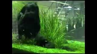 Visita A Aquarium Design Amano