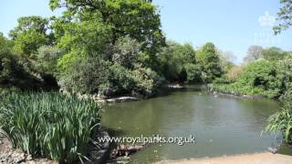 Park Nature - Spring moves into Summer in the Royal Parks