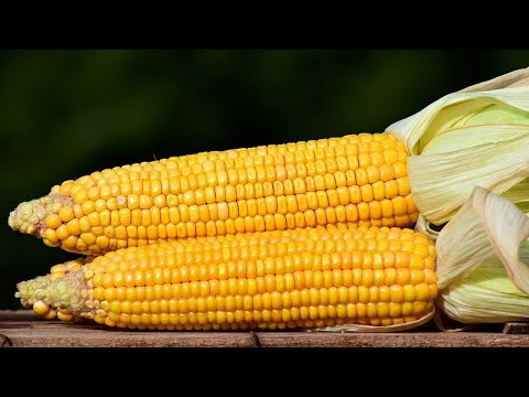 10 Amazing Benefits of Corn | Health And Nutrition