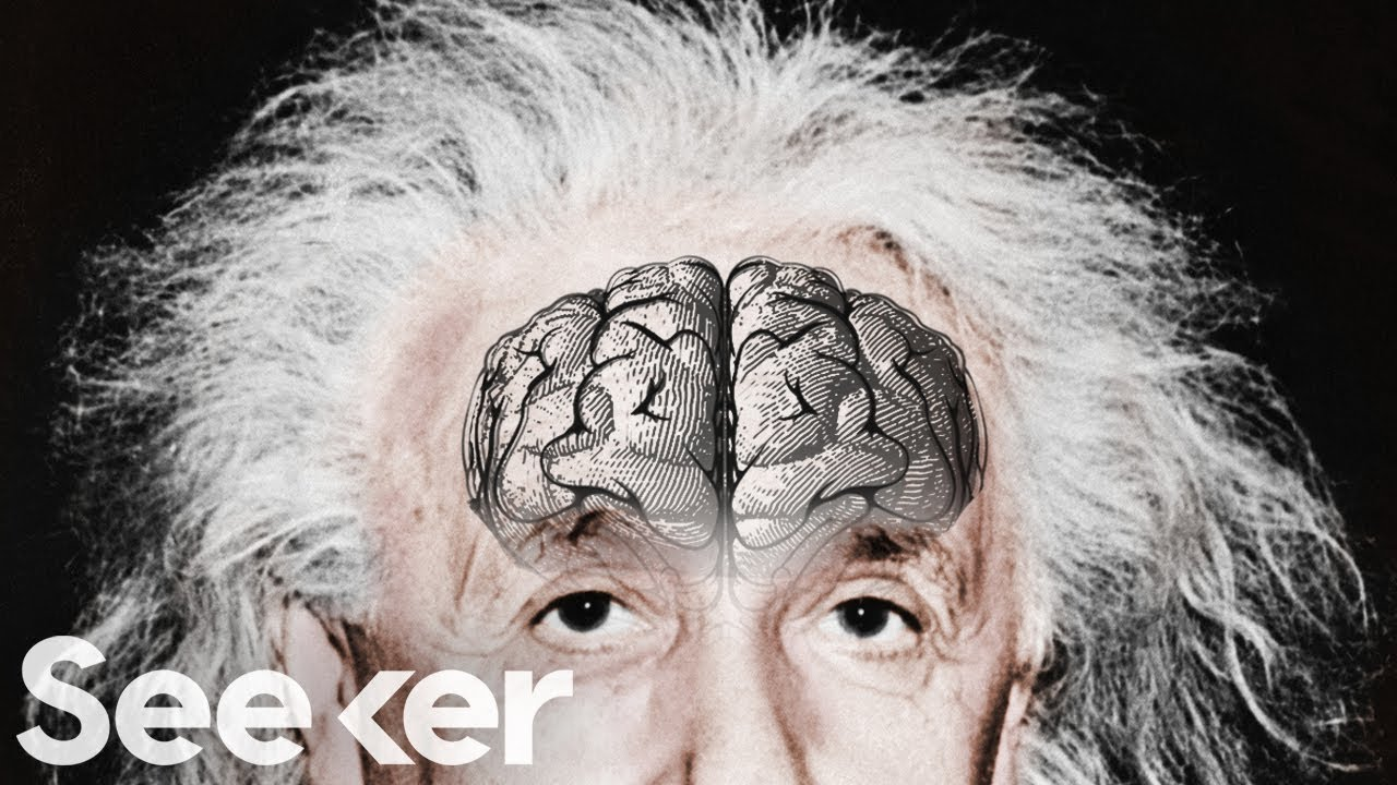 Image result for brain of Einstein is little below average