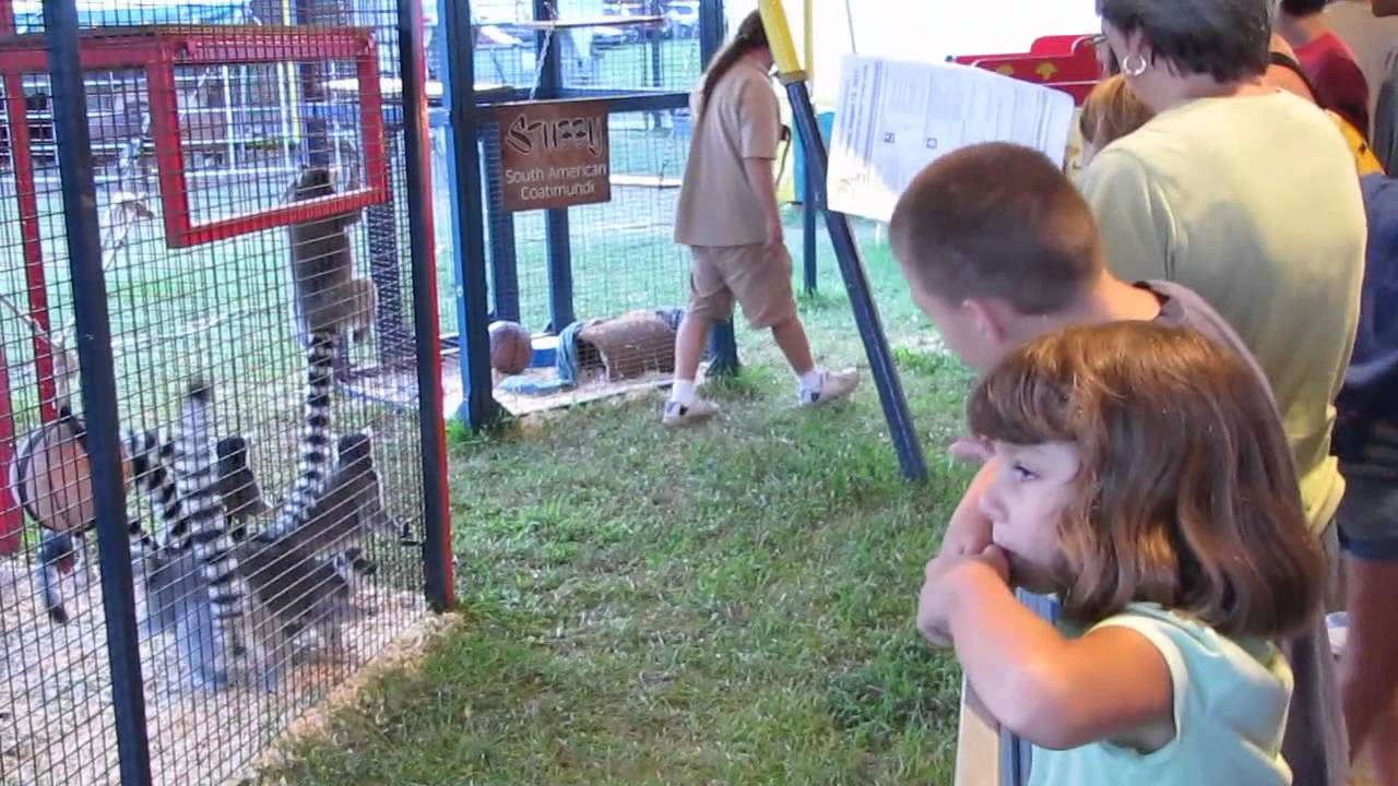 petting zoo at new jersey state fair august 12, 2011 (hd) - youtube