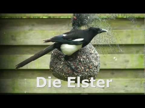 die-elster