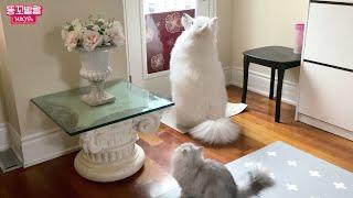 강아지와 고양이가 갑자…