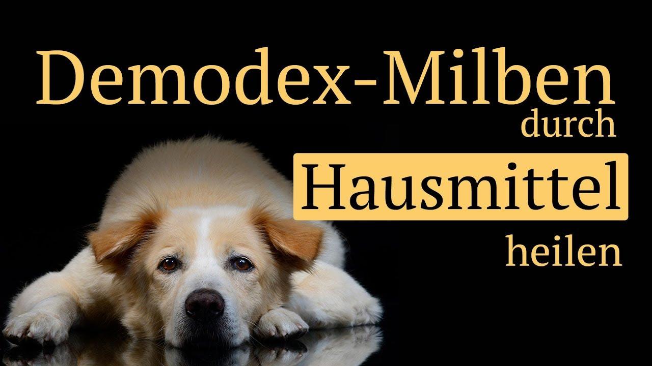 Demodex Milben Beim Hund Mit Hausmitteln Behandeln Ohne Chemie