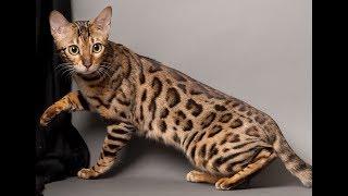 Чем кормить котенка или правильный рацион питания для маленьких котят