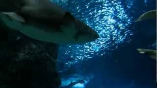 sea world bangkok .avi