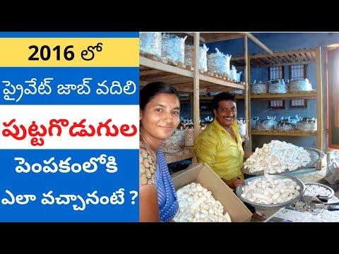Mushroom Cultivation in Telugu - Success Story by Thanusri Mushrooms