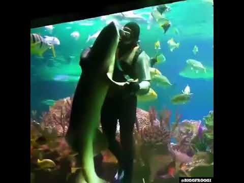 Leigh Ann and Jeremy - Ever Seen A Man Dance With A Shark?