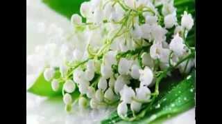 Цветы ландыш