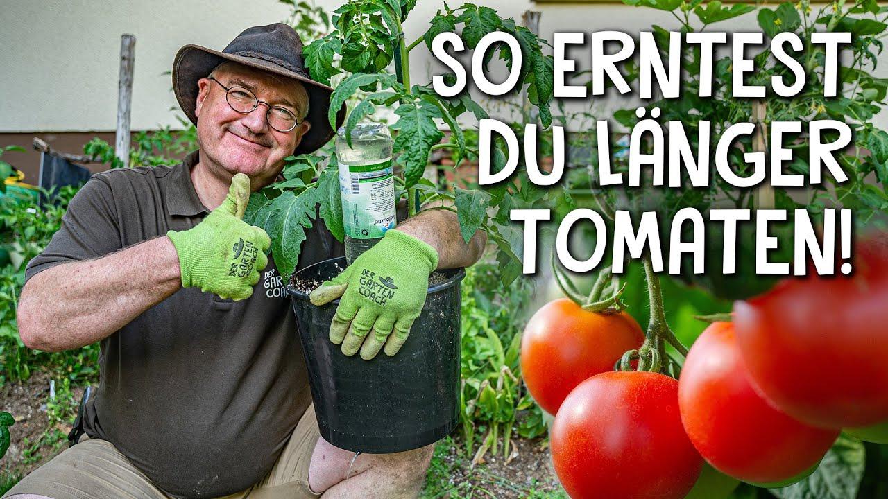 Tomaten richtig pflegen und düngen! 🍅 - 5 Tipps für eine reiche und lange Ernte
