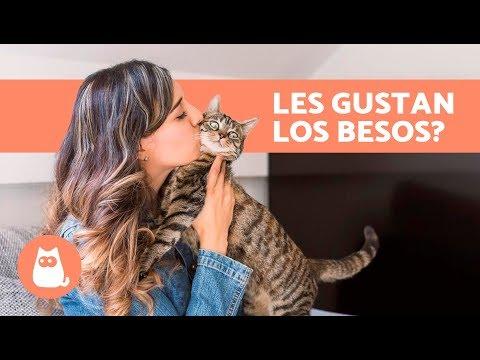 ¿A los gatos les gustan los besos? - ¡Descúbrelo!