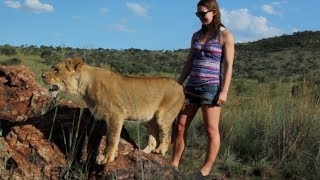Walking With Big Lions