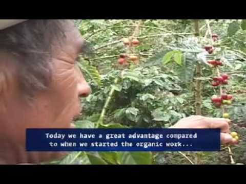 Coffee producer's perspective – Cafédirect