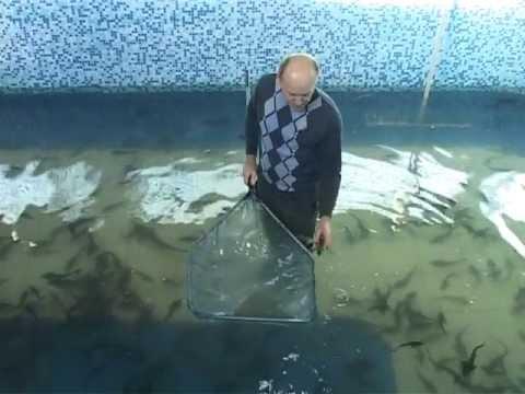 Рыба при беременности. Что можно, а что нельзя?