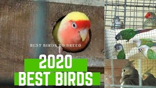 best birds to breed in 2020/ profitable birds for 2020