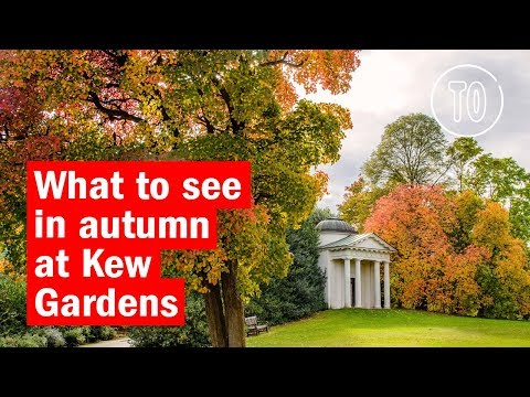 What to look out for in autumn at Kew Gardens | City Secrets | Time Out London