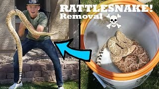 Removing HUGE RATTLESNAKE From Person's House!