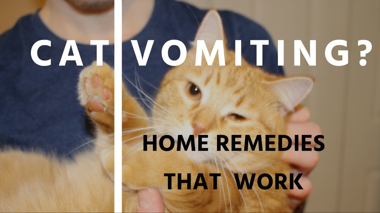 Home Remes Sick Cats Throwing Up - Homemade Ftempo